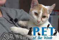 Pet of the Week: Titus the cat
