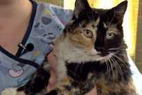 Pet of the Week: Leilani