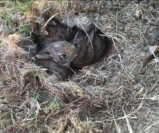 RabbitYoung HSloan 0318