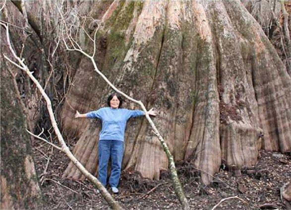 1226 Giant tree