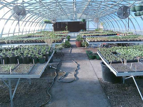 0316 greenhouse sale