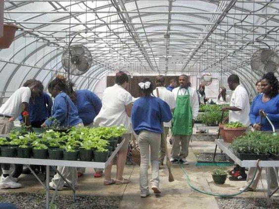EDUBIspring plant sale
