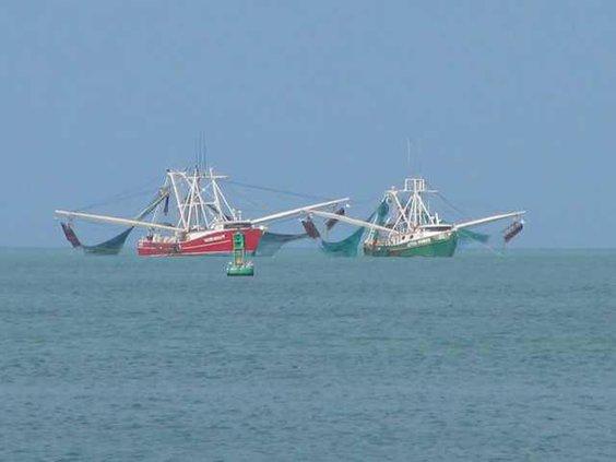Key West shrimping