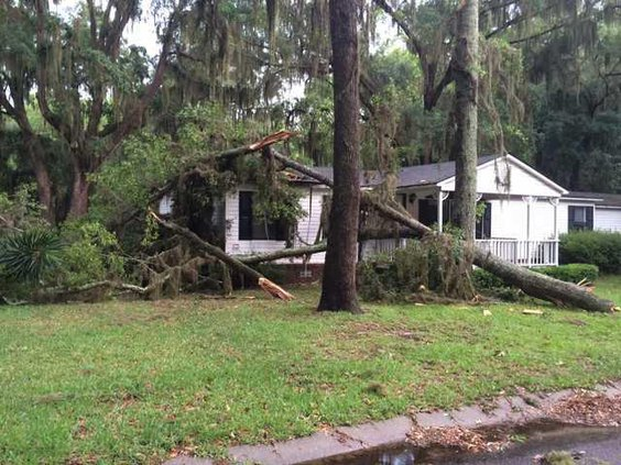 Tree falls on house in Midway
