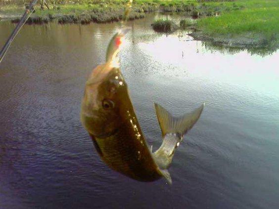 fish-on-hook