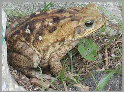 0607 toad