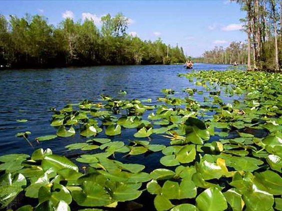 1214 Okefenokee Swamp