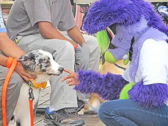 A-dog-is-greeting-by-another-furry-friend-during-Hinesvilles-first-Dog-Day-at-the-Market