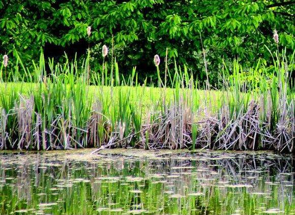 Generic pond