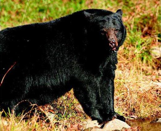 Random bear