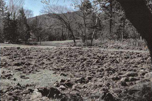 damage to pasture caused by wild hogs-1
