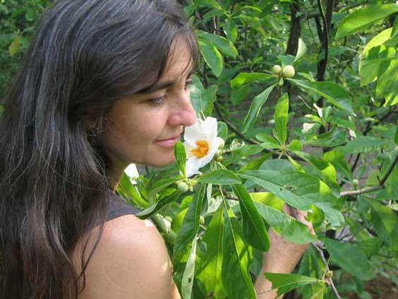 on nature franklin tree