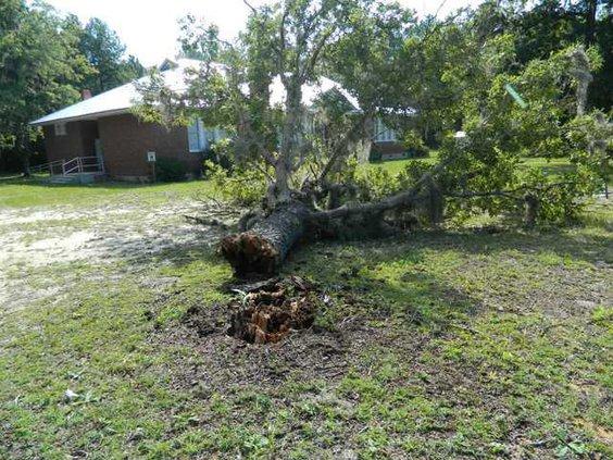 web 0810 downed tree