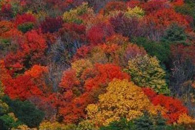 fall-leaf-color-400x267