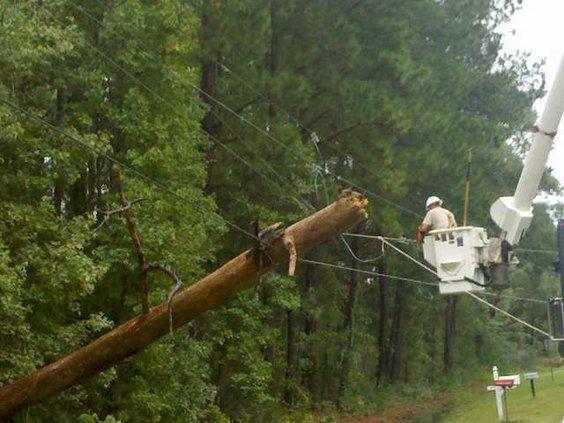 web 1012 Tree on line