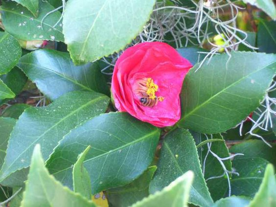 0302 bee in flower