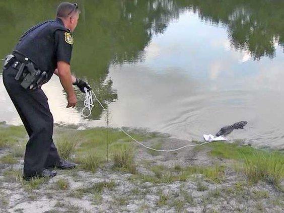Gator gets away.mpg