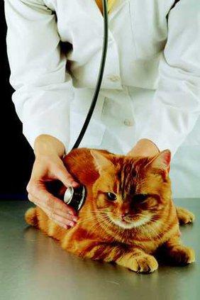 Generic veterinarian