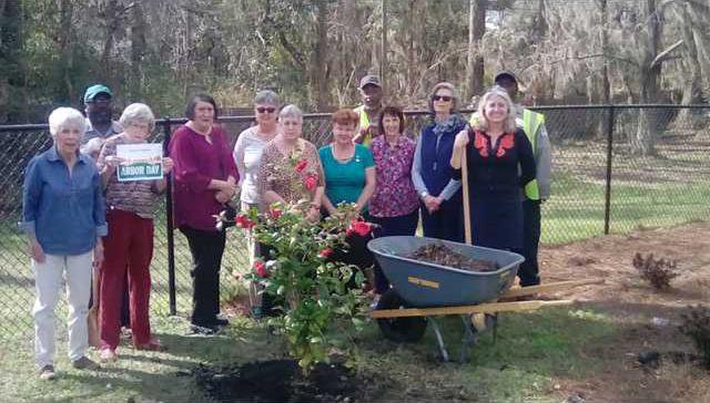 Morning Glory Garden Club plants bushes in memory of Amanda Cox