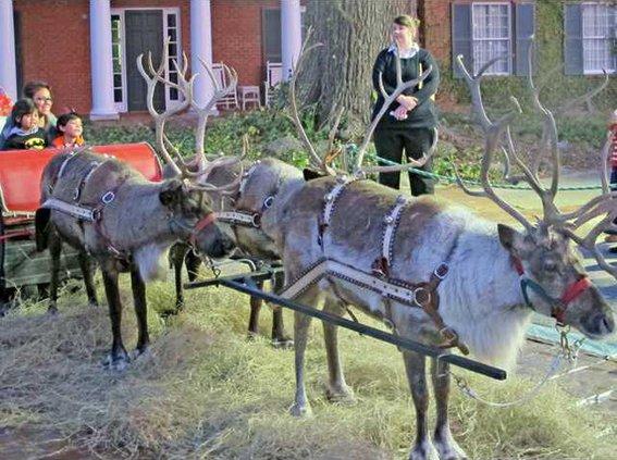 5Santas reindeer