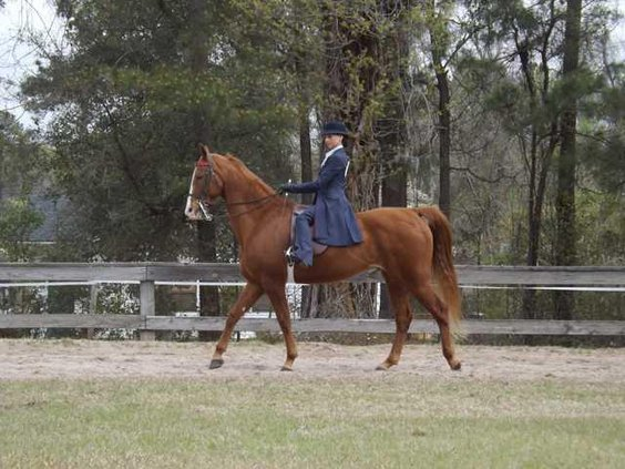 Sandra Scully Riding Jaque Rules