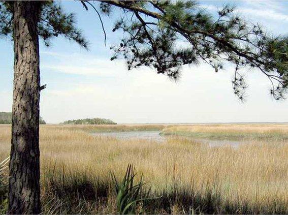 0413 McAllister marsh