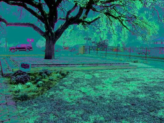 pembroke garden club yard