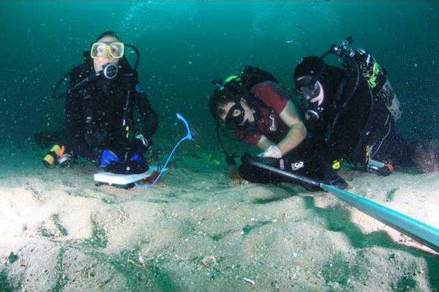 Grays reef underwater