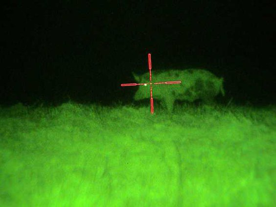 Night vision scope with boar in cross-hairs