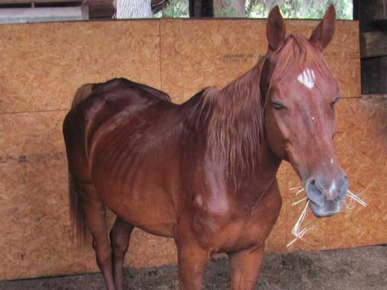 web 0608 Abused horses 3