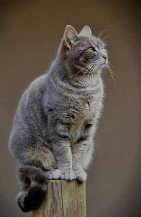 Geechee the Cat
