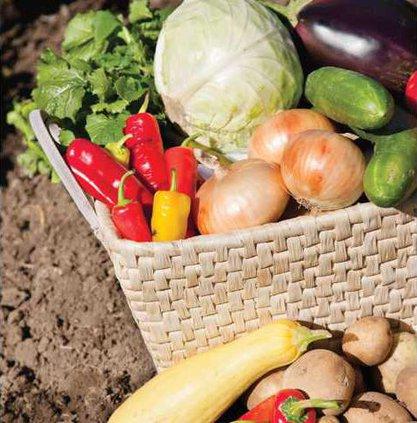 Veggie stockart