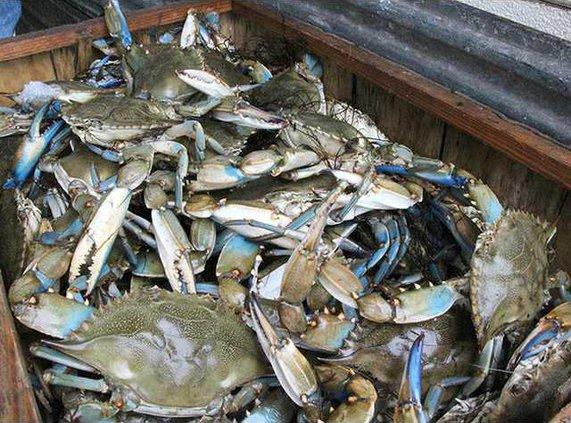 blue crab crate