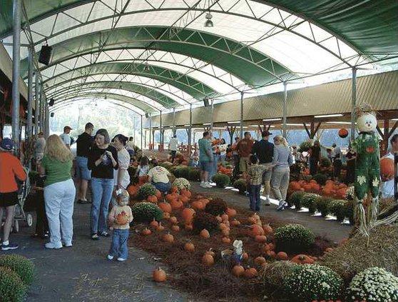 0810-Pumpkin-Patch-Oct-2008-019
