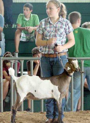 goat show  july 2011 056
