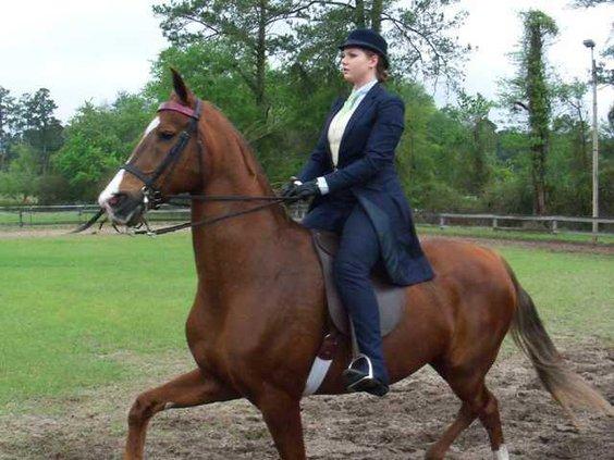 living-horseshowl