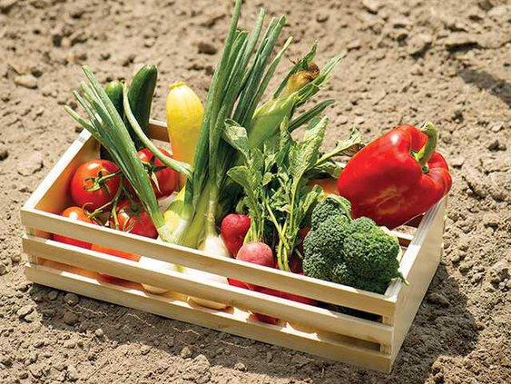vegtable gardening