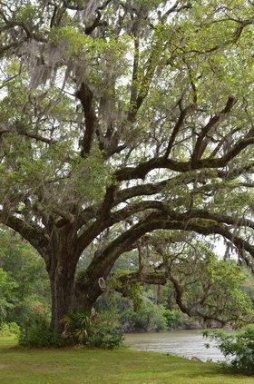Dunham Farms tree
