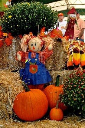 pumpkin patch promo.jpg