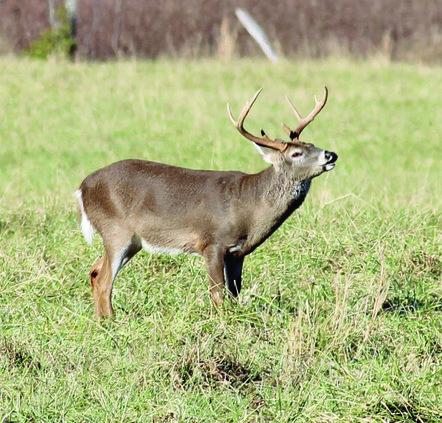 SPORTS deer hunting.jpg