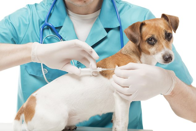 pet vaccinations.jpg