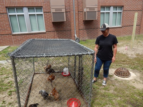 Volunteer spotlight 2 chicken coop.JPG