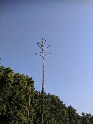 century plant 3