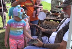 petting baby gator