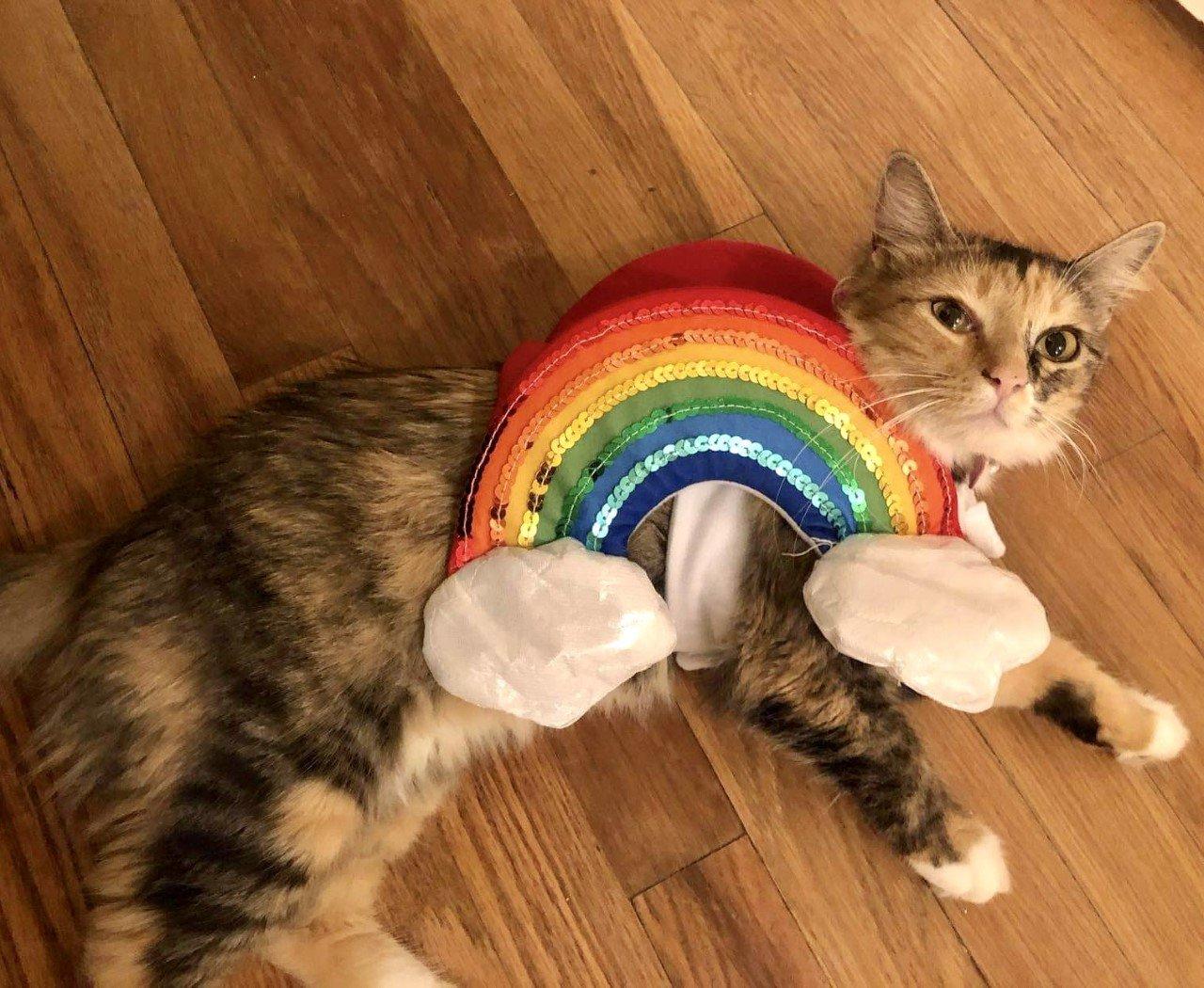 Kassie the rainbow cat
