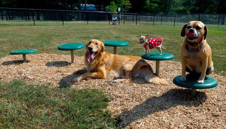 bark park agility course