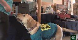 service dog fundraiser