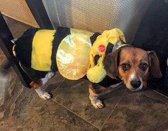 max in dog costume